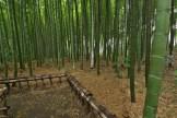 竹林公園 №7
