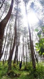Melewati hutan pinus yang cantik banget deh - renjanatuju.com