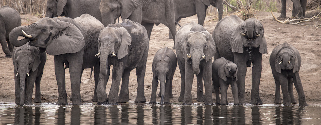 Bir Tutam Afrika: Mazambala Nehir Kampı, Kwando Nehri, Namibya
