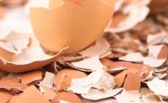 Yumurta Kabuğu ile Kalsiyum Depolayın…