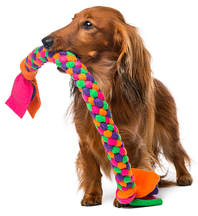 photo-dog-with-toy