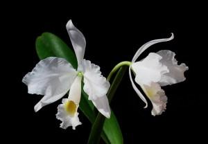 11月24日の誕生花