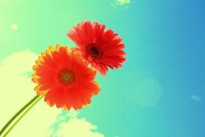 幸福・幸せの花言葉