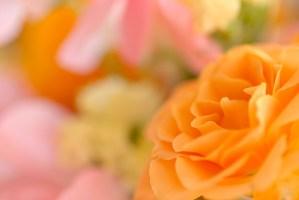 祝福・門出の花言葉