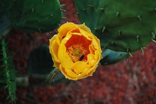 cactus_2
