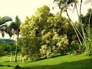 Benjamin tree-02