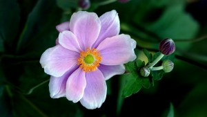 10月15日の誕生花