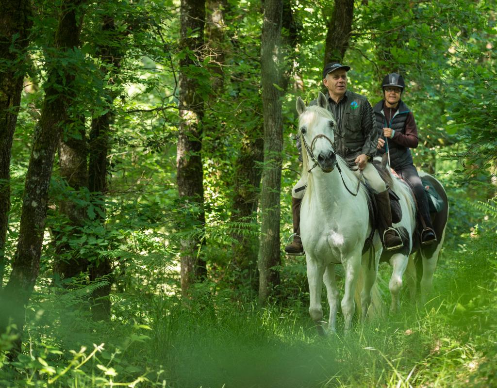 A cheval en Forêt de Rennes
