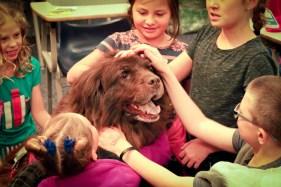 kids university zoo dogs kids petting