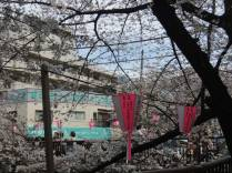 cerisier-tokyo10-renoma