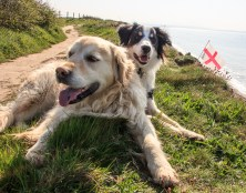 ISO250, F11, 1/320 sec - St George's Day Flag and my dogs!