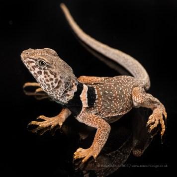 Reflective lizard - ISO400, F9, 1/200sec