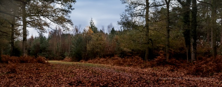 Autumn view in the New Forest woods.