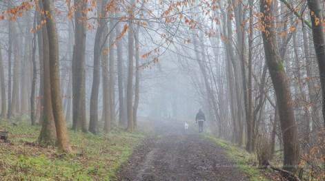 26 / 366 Dog walker in the mist