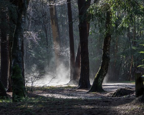 52 / 366 - Evaporating moisture on a forest walk - a reason to carry a camera!
