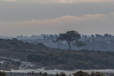 57 / 366 - Longslade Bottom in the New Forest