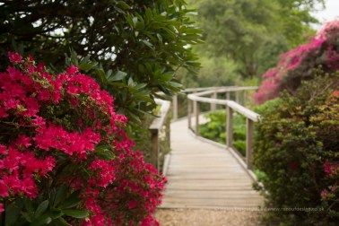 Another path through the garden - leading lines!
