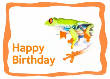 Tree Frog - birthday cards!