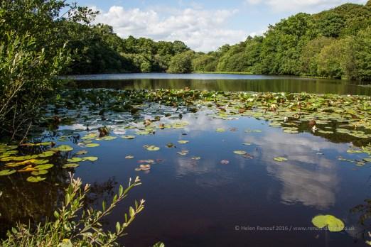 Eyeworth Pond near Fritham
