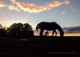 New Forest sunset - after a run - iphone image