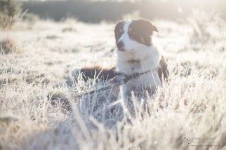 Shooting into the sun on a frosty morning