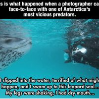 This Terrified Diver Prepares To Die As A Predator Approaches, then the most amazing thing EVER happened. (Pictures)