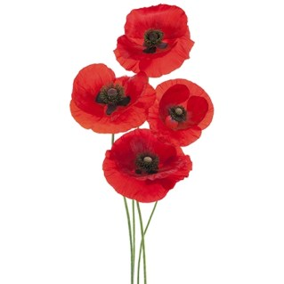 red-poppy-flower-meaning