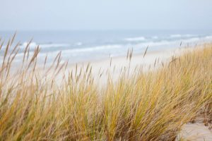 Beach dunes with sea oats