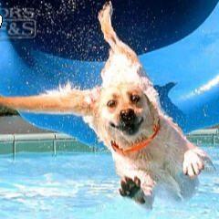Dog-Water-Slide