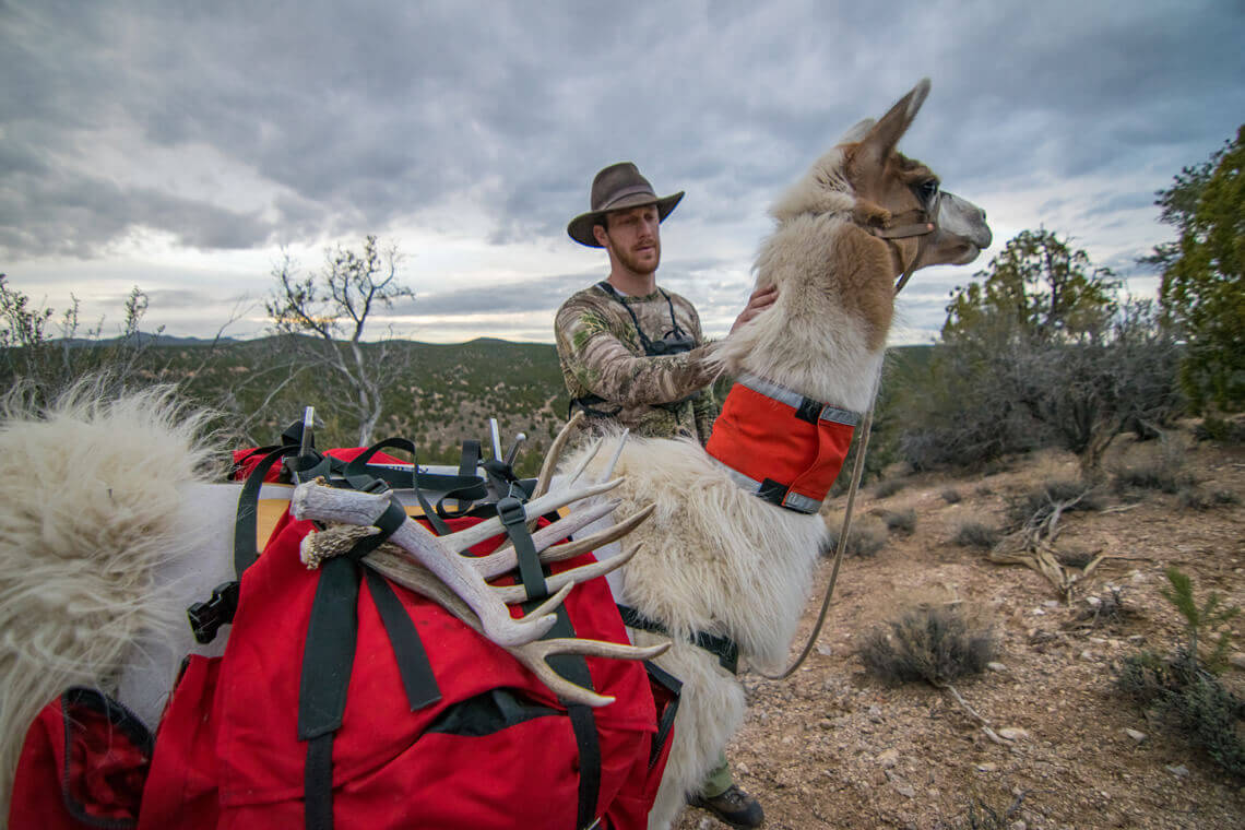 Rent pack llamas for any adventure such as shed hunting, camping, hunting, or fishing.