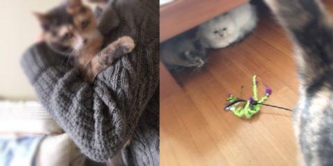相手のお部屋と猫たち