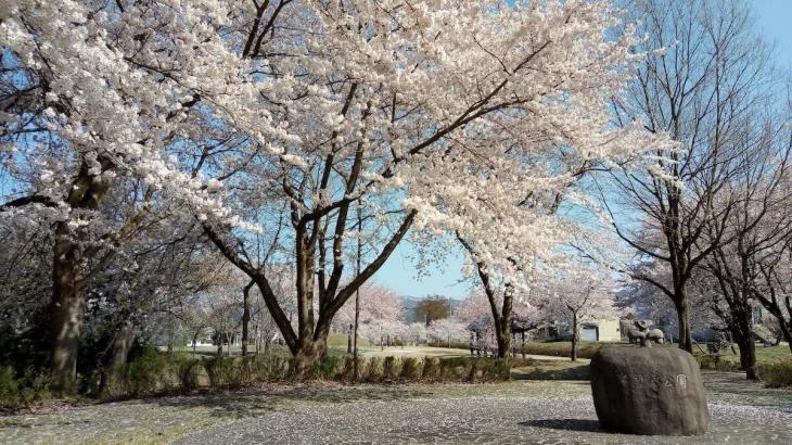 桜と泉縄文公園