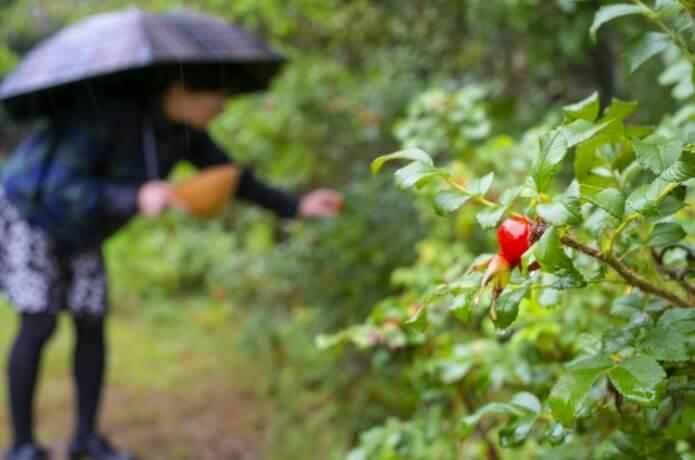 雨天時の樹木観察