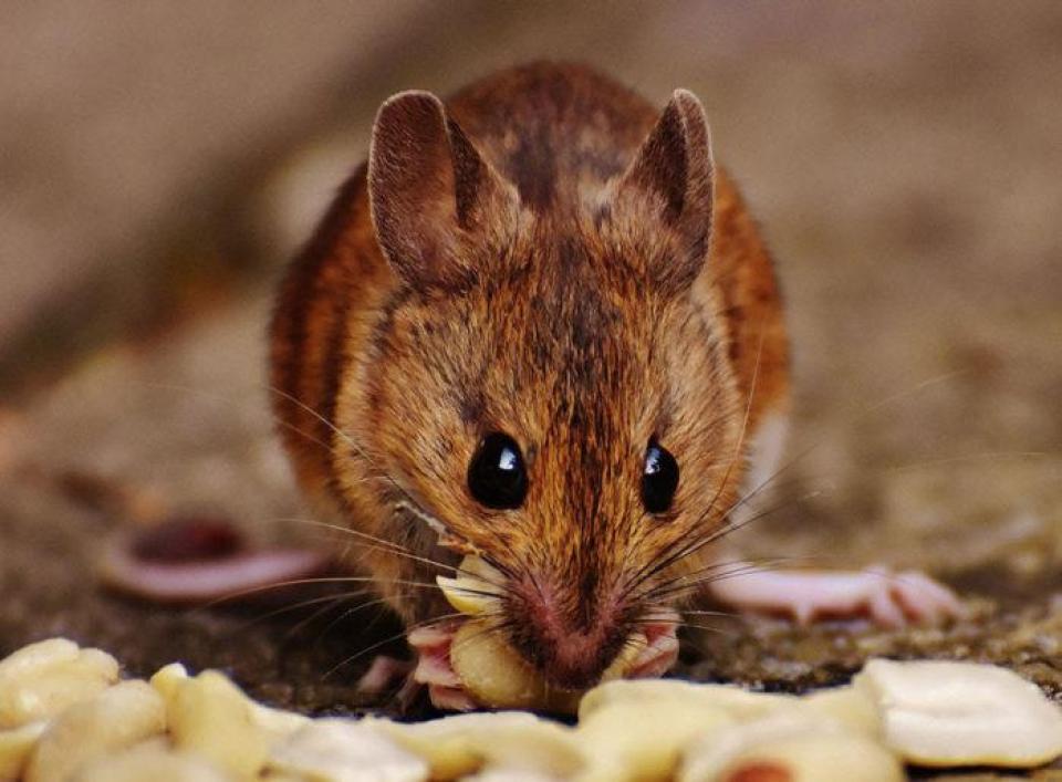 Termite Control Treatment Inspection
