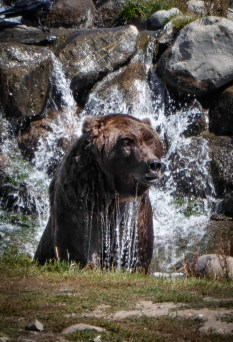 Grizzly Park-2
