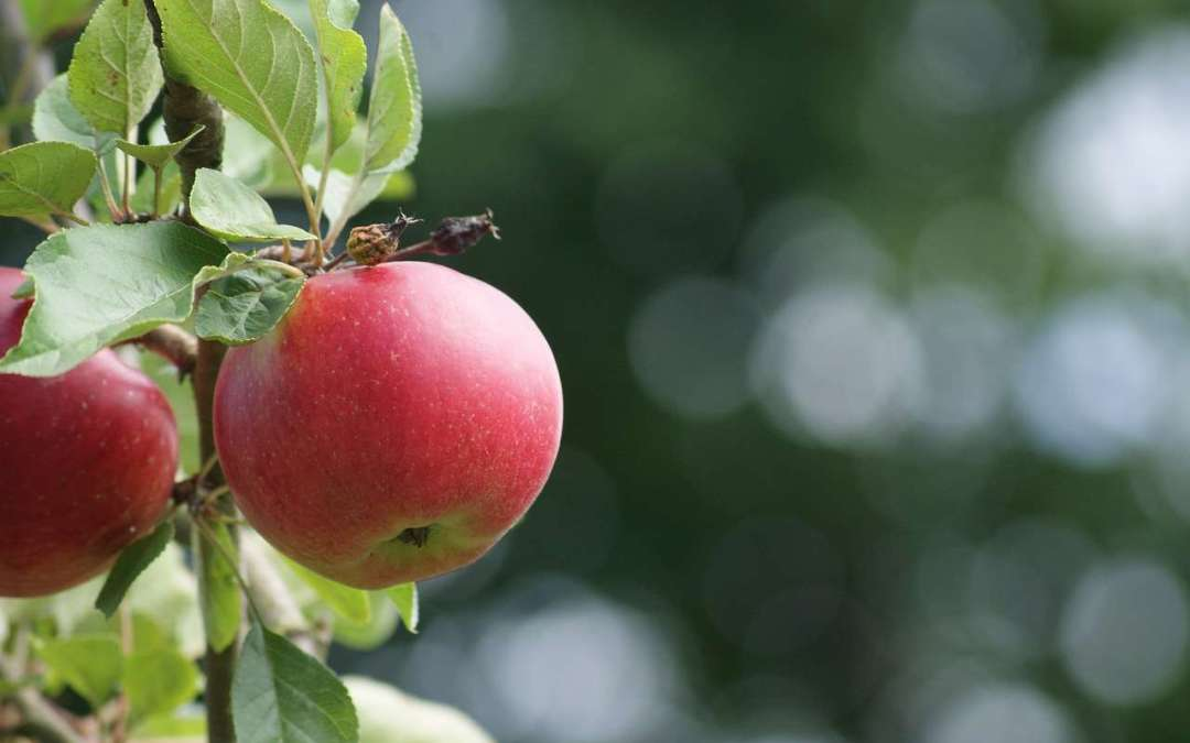 Trees, fruit, gardening season is upon us.
