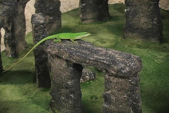 build-Stonehenge-for-lizard 2