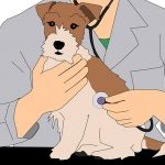 狂犬病ワクチン…予防接種は毎年必要?格安料金も?