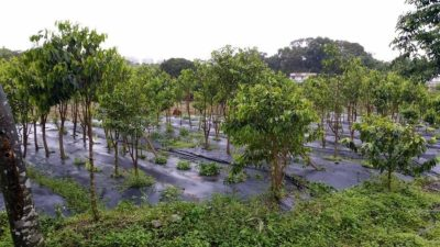 Asia plantation capital apc group