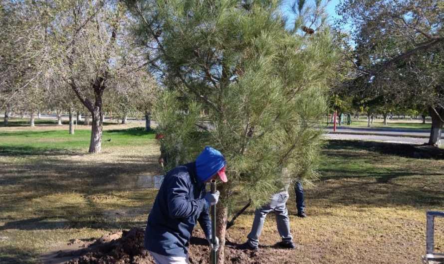 Ciudad Juárez: Reforestación de El Chamizal