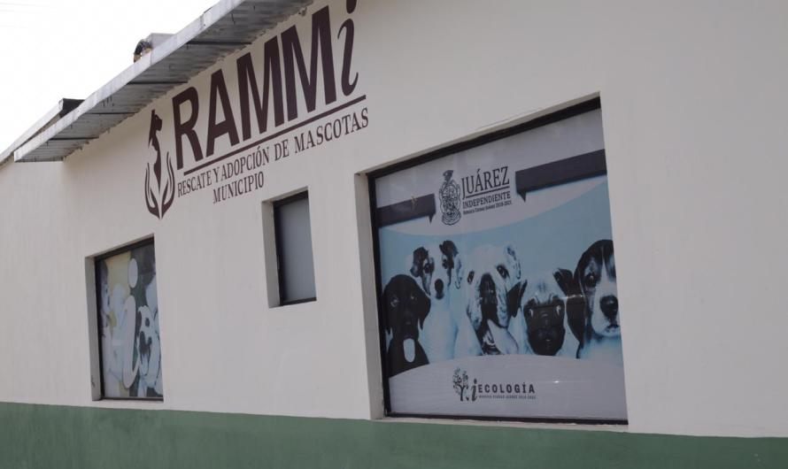 RAMMi; campaña de esterilización gratuita a perros y gatos