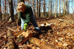 Bonnie Barton digs up a clump of the native crane-fly orchid behind the dog park in Brook Run Park Saturday morning. The orchids are in the path of the multi-use trail the city is building in Brook Run Park.