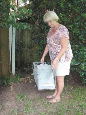 Stayce Bushart chooses a spot to place a large trap to catch feral cats on Skyland Trail in the Drew Valley neighborhood.