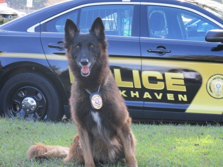 K-9 officer Grizz has recovered after a yellow jacket attack.