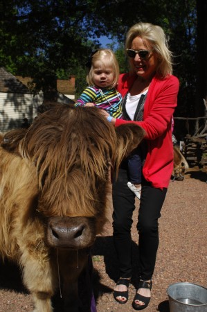 """Atlanta History Center; Saturday April 9, 2016 11:00am. """"Sheep to Shawl"""" event. Debbie Hudson, and her grand daughter Reed Butkus (2yr) pet Scottish Highland Cow in the farm animal petting area."""