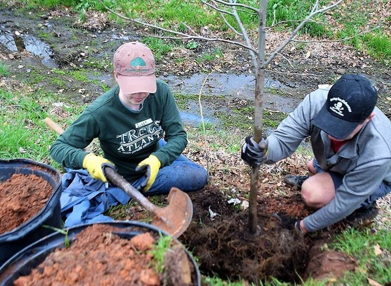 brookhaven tree planting