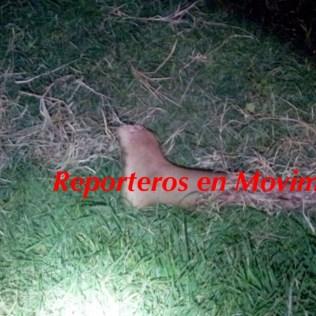 Pie izquierdo hallado a las 22:30 horas del jueves en Zapotlán.