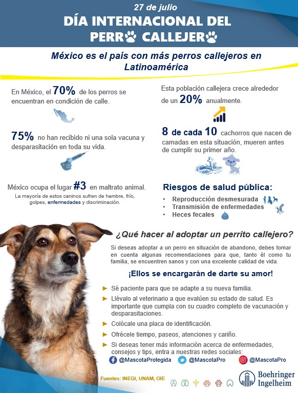 Infografía Perro Callejero