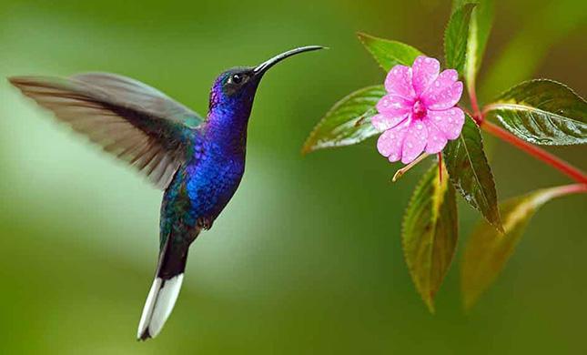 colibri-mexicano.jpg
