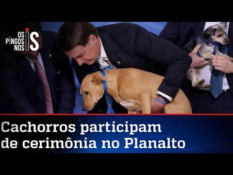 Bolsonaro sanciona lei que amplia pena para maus-tratos a cães e gatos
